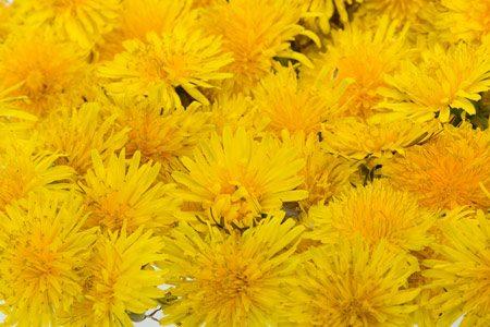 מדבקות לארונות   פרחי בר