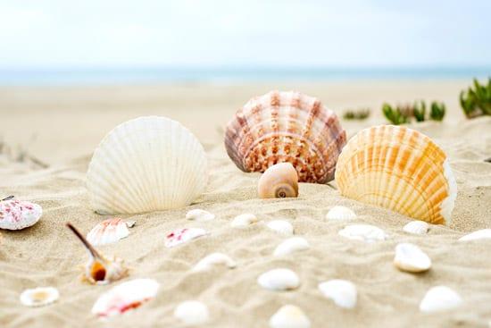 טפט קונכיות בחוף
