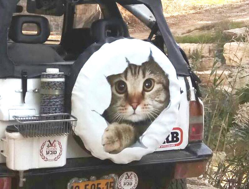 מדבקה לרכב עם חתלתול שובב