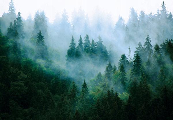 מדבקת טפט נוף של יער מעורפל