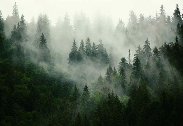 מדבקת טפט נוף של יער מעורפל בגוון צהבהב