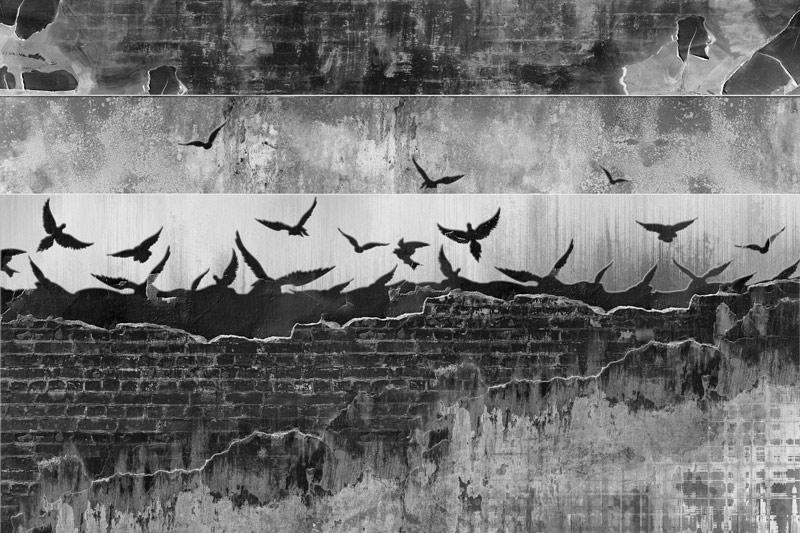 טפט בריקים וגרפיטי שחור גדוש ציפורים