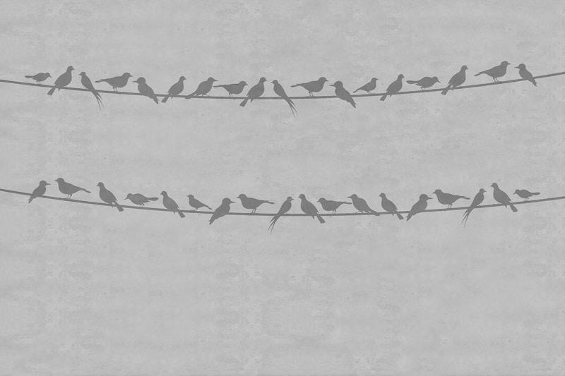 ציפורים נחות על רקע בטון