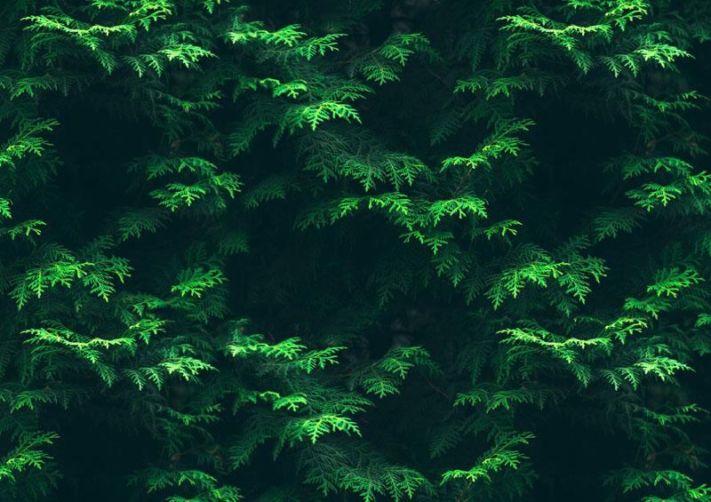 בתוך העצים