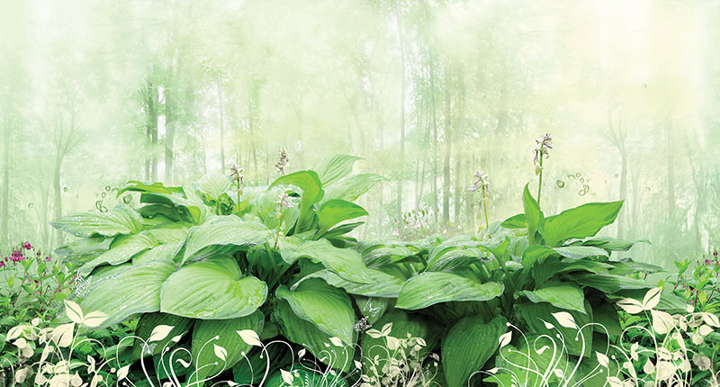 טפט יער קסום עם רקע עדין
