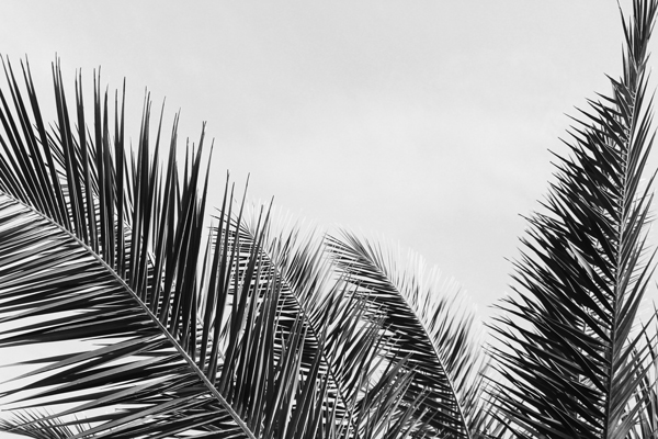 טפט - ענפי דקל