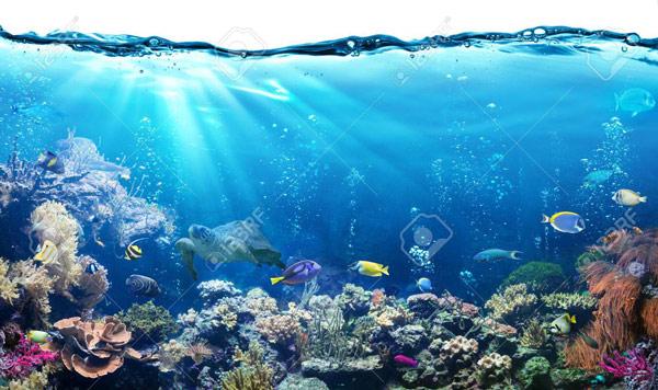 טפט - מתחת לים