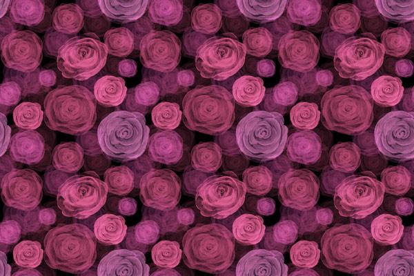 טפט - ורדים ורודים ורקע שחור